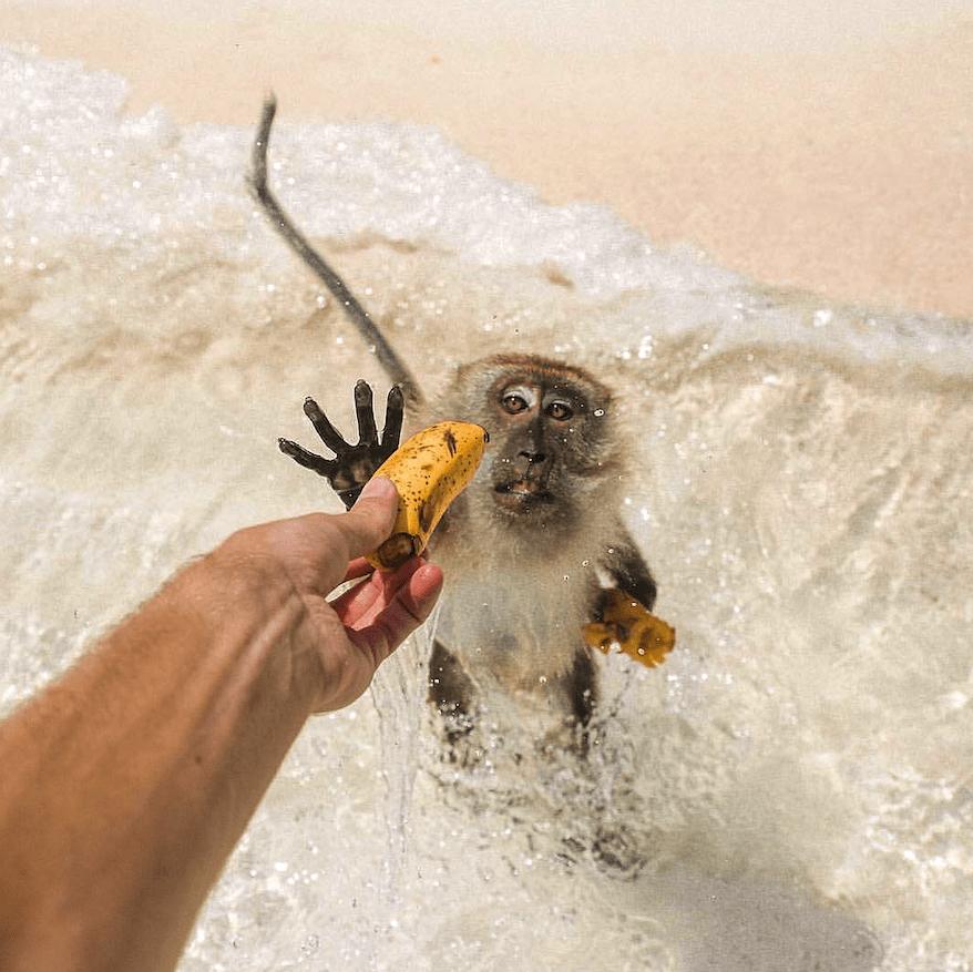 Monkey Beach Banana