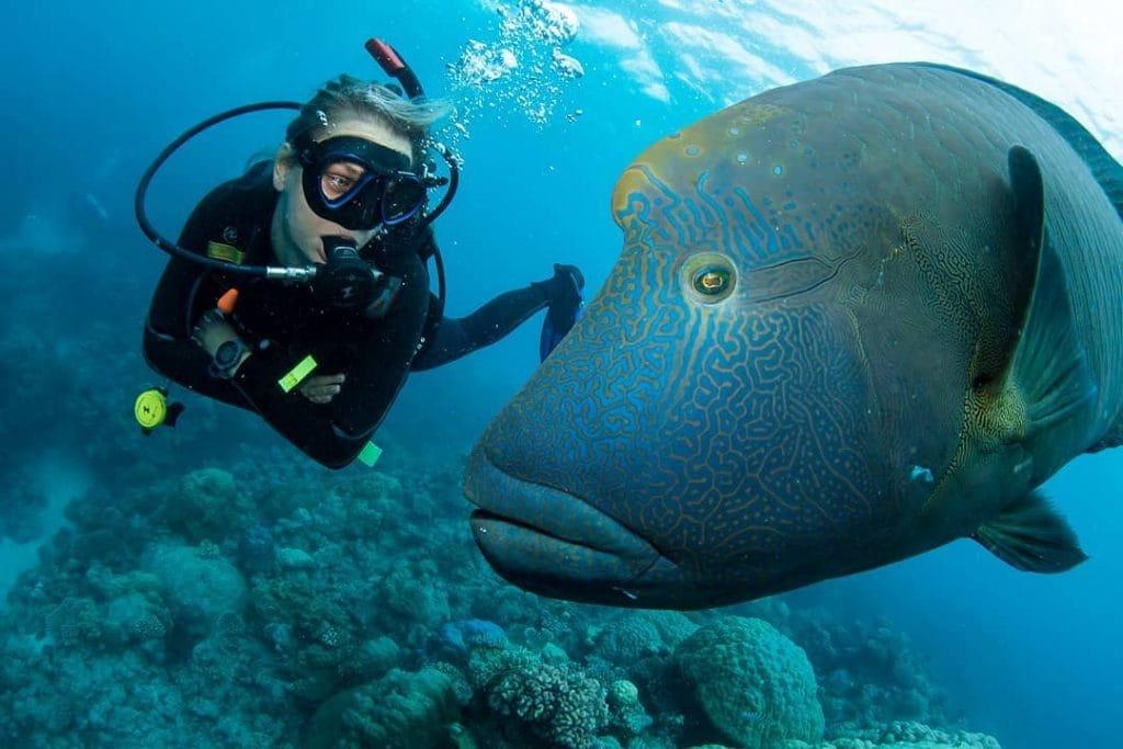 Cairns East Coast of Australia